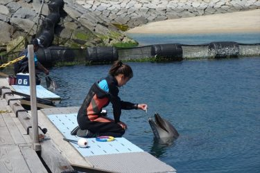 しまなみ海道でイルカと触れ合えるドルフィンファームはファミリーサイクリングにイチオシの立ち寄りスポット